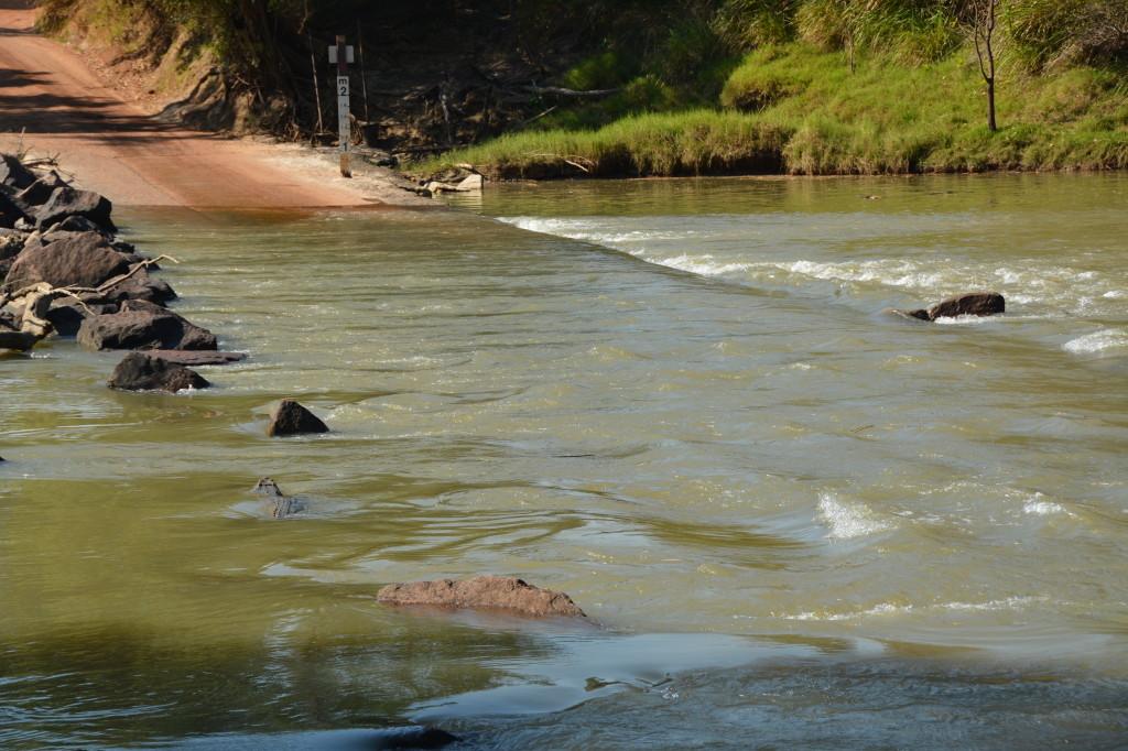 saltwater crocodile crossing Cahills Crossing, Kakadu